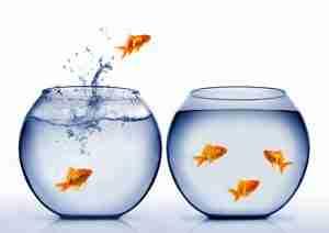 fish-jumping_-mikael-damkier